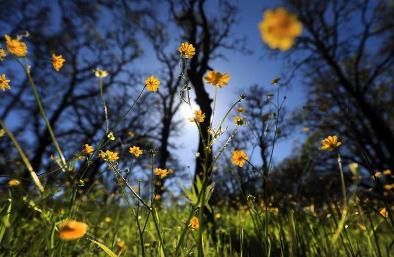 Sonoma County Gets Top Grades For Clean Air, But Poor Ranking For Bay Area